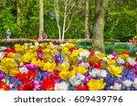 Keukenhof Park  Netherlands....