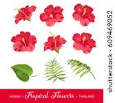 set of tropical flowers... | Shutterstock .eps vector #609469052