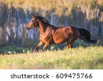 chestnut horse running in... | Shutterstock . vector #609475766