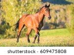 Stock photo horse walking in field 609475808