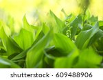 blossoming lilies of the valley ... | Shutterstock . vector #609488906