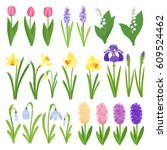 spring flowers. irises  lilies...   Shutterstock .eps vector #609524462