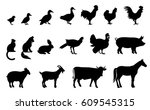 silhouettes of domestic birds... | Shutterstock .eps vector #609545315