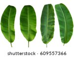 Four Banana Leaf Isolated On...