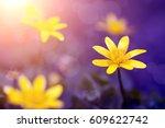 Stock photo spring flowers 609622742