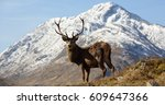 wild red deer stag with snow... | Shutterstock . vector #609647366