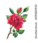 red rose flower. watercolor | Shutterstock . vector #609683942