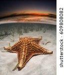 sunset starfish  | Shutterstock . vector #609808082