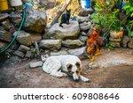 farm family | Shutterstock . vector #609808646