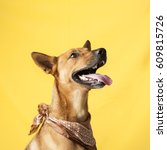 Stock photo happy curious dog mixed breed isolated on a colorful background 609815726