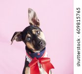 Stock photo happy curious dog mixed breed puppy isolated on a pink background 609815765