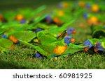 rainbow lorikeets | Shutterstock . vector #60981925