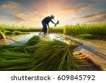 asian farmer working on rice... | Shutterstock . vector #609845792