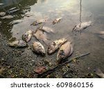dead fish on the river. dark... | Shutterstock . vector #609860156