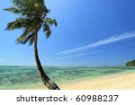 Seychelles seascape. Palm, ocean and blue sky - stock photo