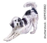 Dog English Setter. Watercolor...