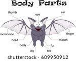 bat body parts. animal anatomy... | Shutterstock . vector #609950912