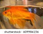 goldfish swimming in fish tank...   Shutterstock . vector #609986156