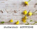 Lesser Celandine Flower In Woo...