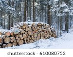 Cut And Stacked Pine Timber In...