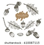 acorn collection vector set... | Shutterstock .eps vector #610087115