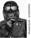 portrait gorilla vintage helmet ...   Shutterstock . vector #610095002