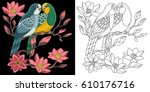 Embroidery Parrots Design....
