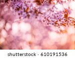 closeup spring blossom tree...   Shutterstock . vector #610191536