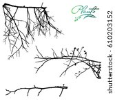 set of branches dogrose with... | Shutterstock .eps vector #610203152