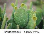 cactus texture background.... | Shutterstock . vector #610274942