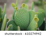 Cactus Texture Background....