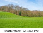 Panorama Of A Sunny Green...