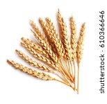 wheat isolated on white close... | Shutterstock . vector #610366646