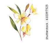 tropical flowers plumeria... | Shutterstock .eps vector #610397525