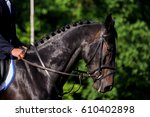 portrait of brown sport horse... | Shutterstock . vector #610402898