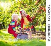 kids picking cherry on a fruit... | Shutterstock . vector #610439252