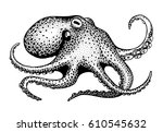 hand drawn octopus on white...