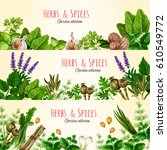 green herbs and spices cartoon... | Shutterstock .eps vector #610549772