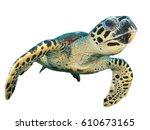Sea turtle isolated. hawksbill...