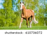 horse walking on meadow | Shutterstock . vector #610736072