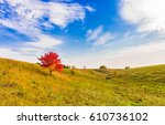 cow grazing in field near... | Shutterstock . vector #610736102