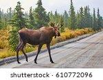 moose  denali national park and ... | Shutterstock . vector #610772096