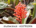 Small photo of Spring. The Bromeliad in a greenhouse. (Bromelioideae)
