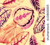 detailed isolated leaf pattern. ... | Shutterstock . vector #610800005