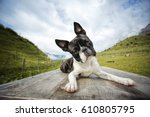 Hiking With A Boston Terrier In ...