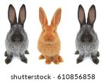 Stock photo rabbits on a white background 610856858