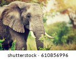 portrait of a big beautiful... | Shutterstock . vector #610856996