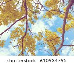 trees and branches with sky... | Shutterstock . vector #610934795