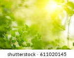 natural green background  the... | Shutterstock . vector #611020145