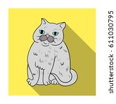 exotic shorthair icon in flat... | Shutterstock . vector #611030795